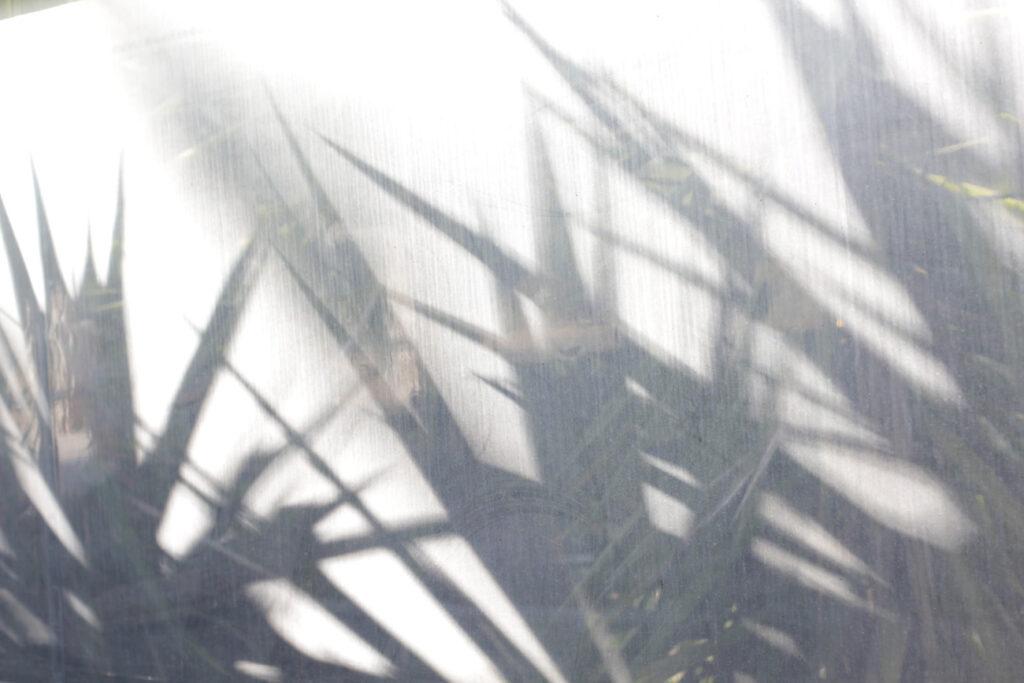 paula-immich-palm-trees-shadow